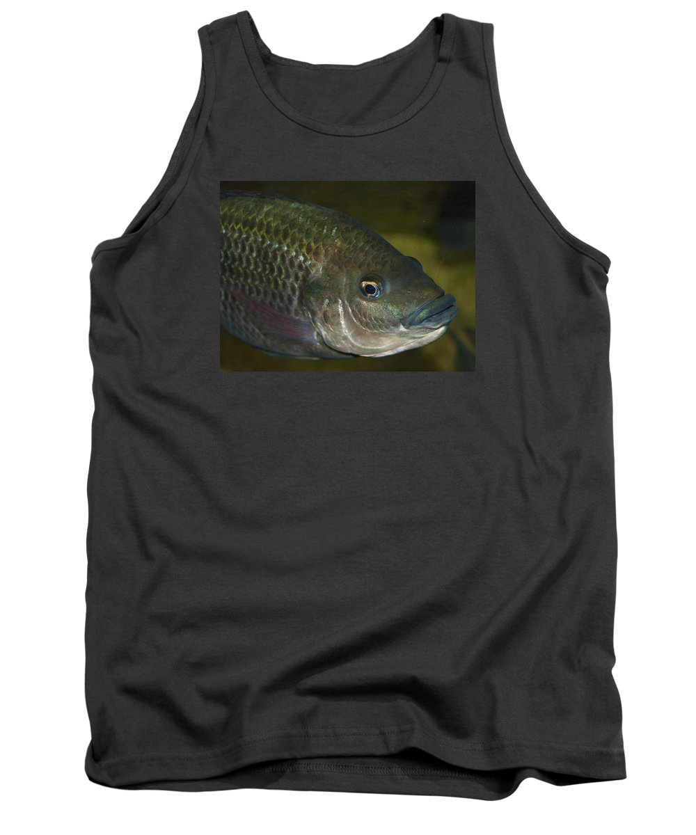 Alone Tank Top featuring the photograph Single Fish Swimming by Jill Mitchell