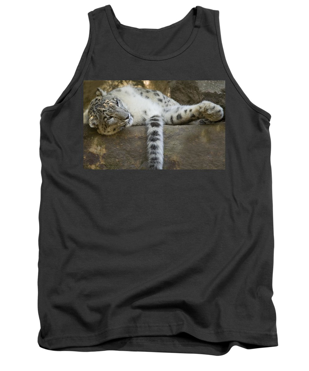 Snow Leopard Tank Top featuring the photograph Snow Leopard Nap by Mike Dawson