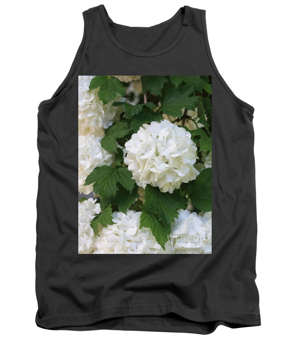 Snowball Tree Tank Top featuring the photograph Snowball Tree With Delicate Leaves by Carol Groenen