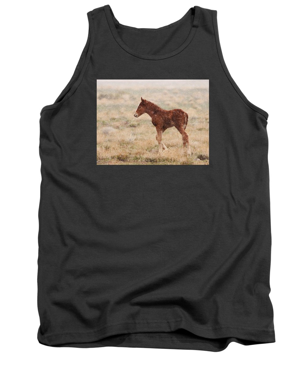 Wild Horse Tank Top featuring the photograph Spring Storm Foal by Kent Keller