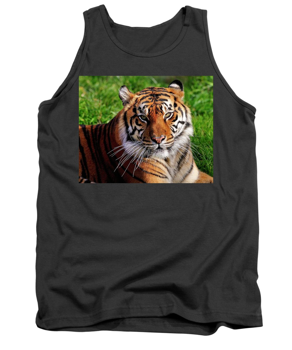 Sumatran Tank Top featuring the photograph Sumatran Tiger by Bill Dodsworth