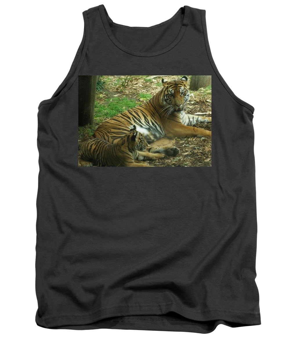 Tiger Tank Top featuring the photograph Sumatran Tigers by Travis Day
