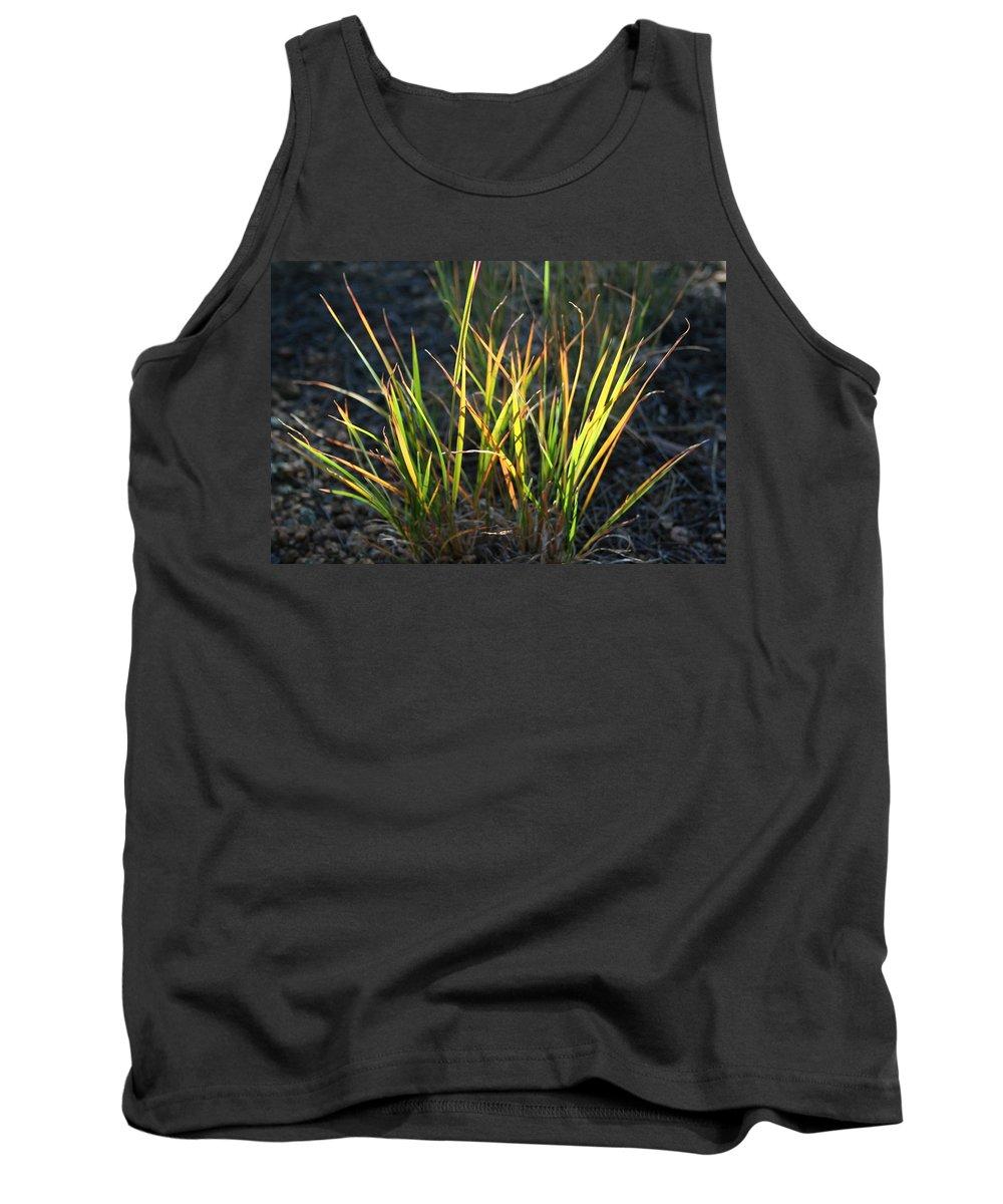 Grass Tank Top featuring the photograph Sunlit Grass by Ric Bascobert