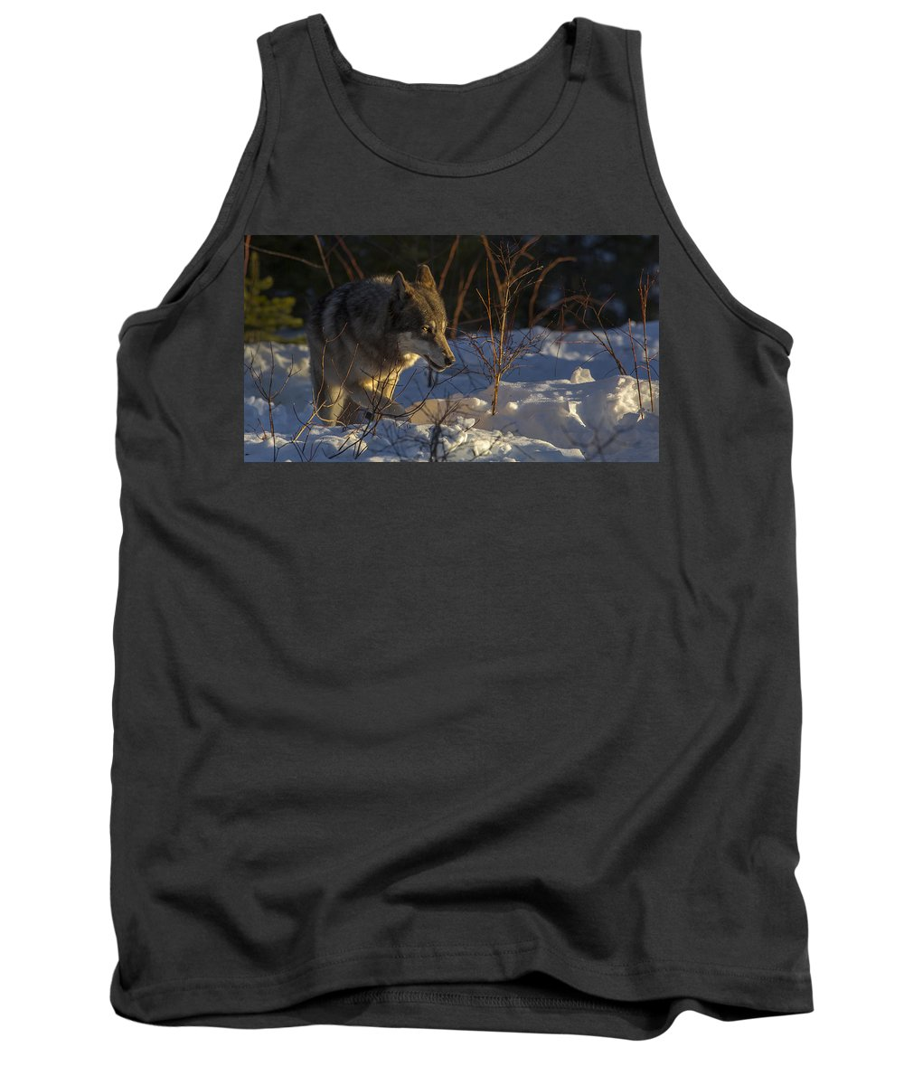 Wolf Tank Top featuring the photograph Sunrise Comes by Jeff Shumaker