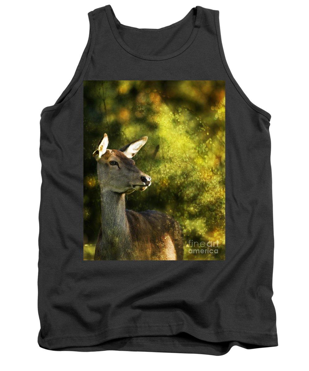 Deer Tank Top featuring the photograph The Deer by Angel Ciesniarska