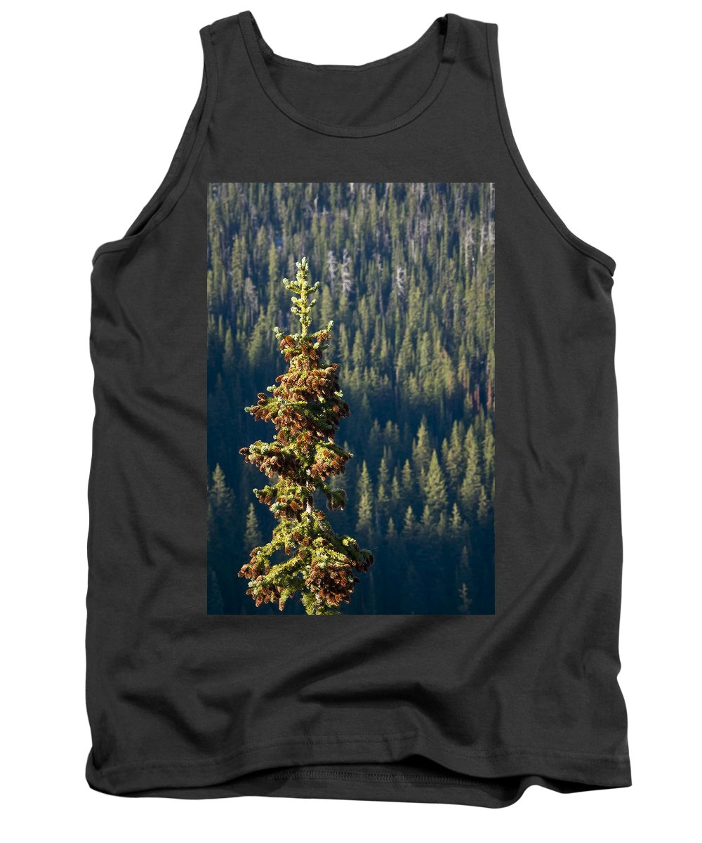 Trees Tank Top featuring the photograph The Next Generation by Albert Seger