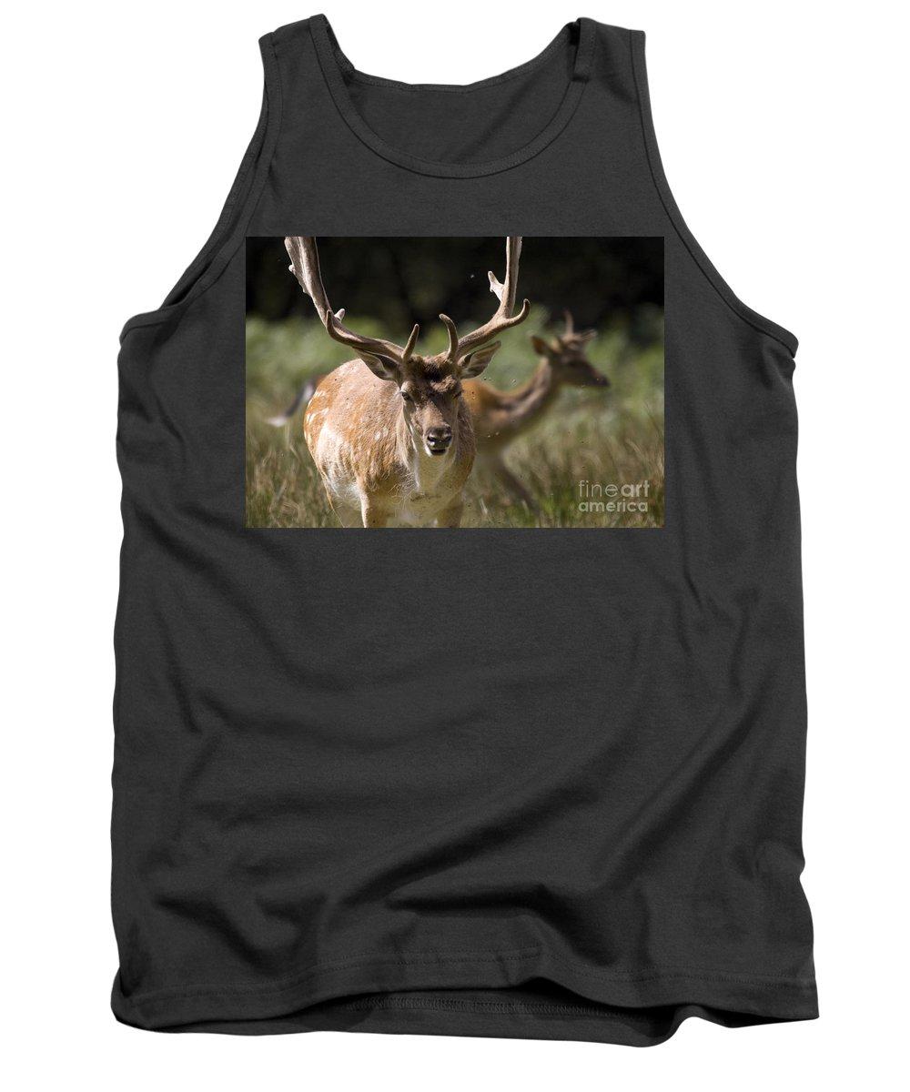 Fallow Deer Tank Top featuring the photograph Those Bloody Flies by Angel Ciesniarska