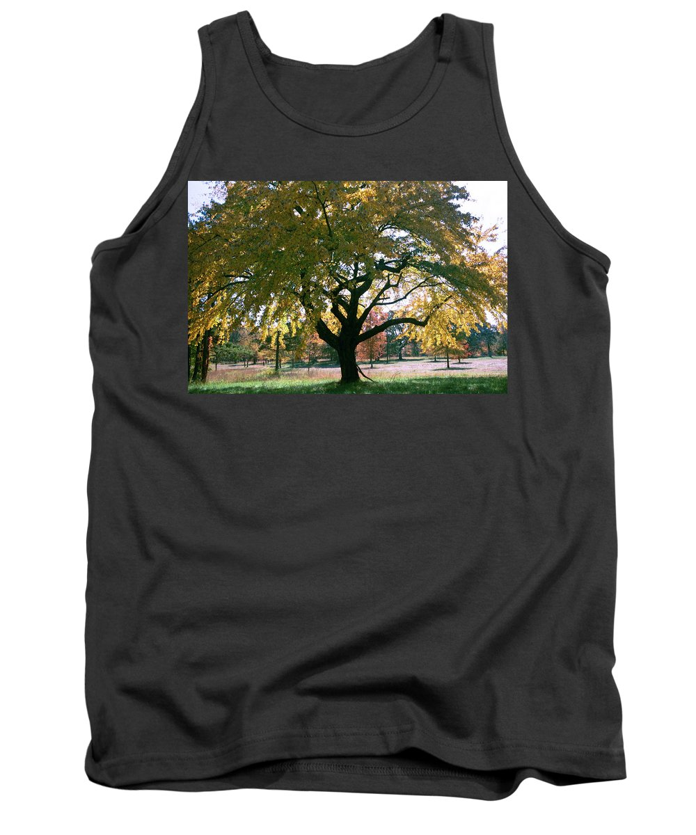 Tree Tank Top featuring the photograph Tree by Flavia Westerwelle