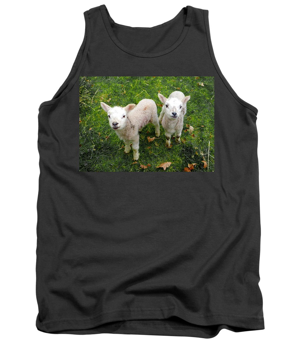 Lamb Tank Top featuring the mixed media Twins - Spring Lambs by P Donovan