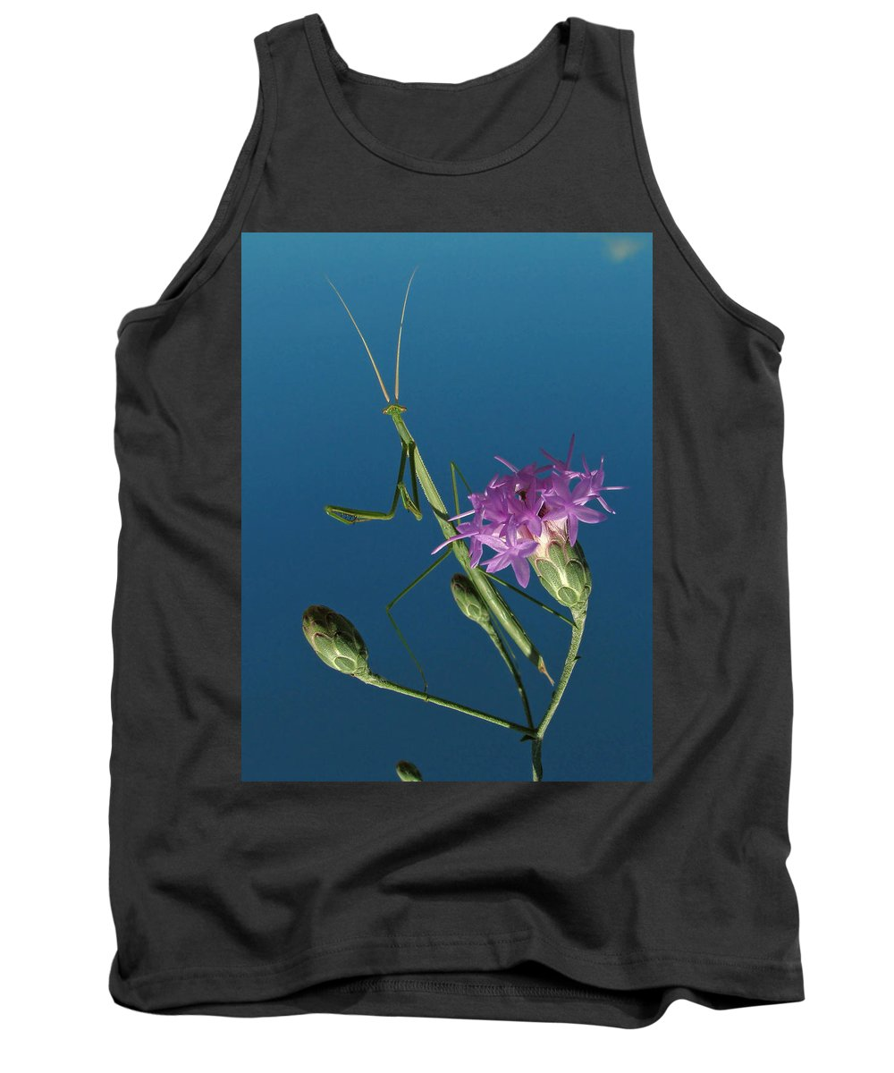 Nature Tank Top featuring the photograph Walkingstick by Peg Urban