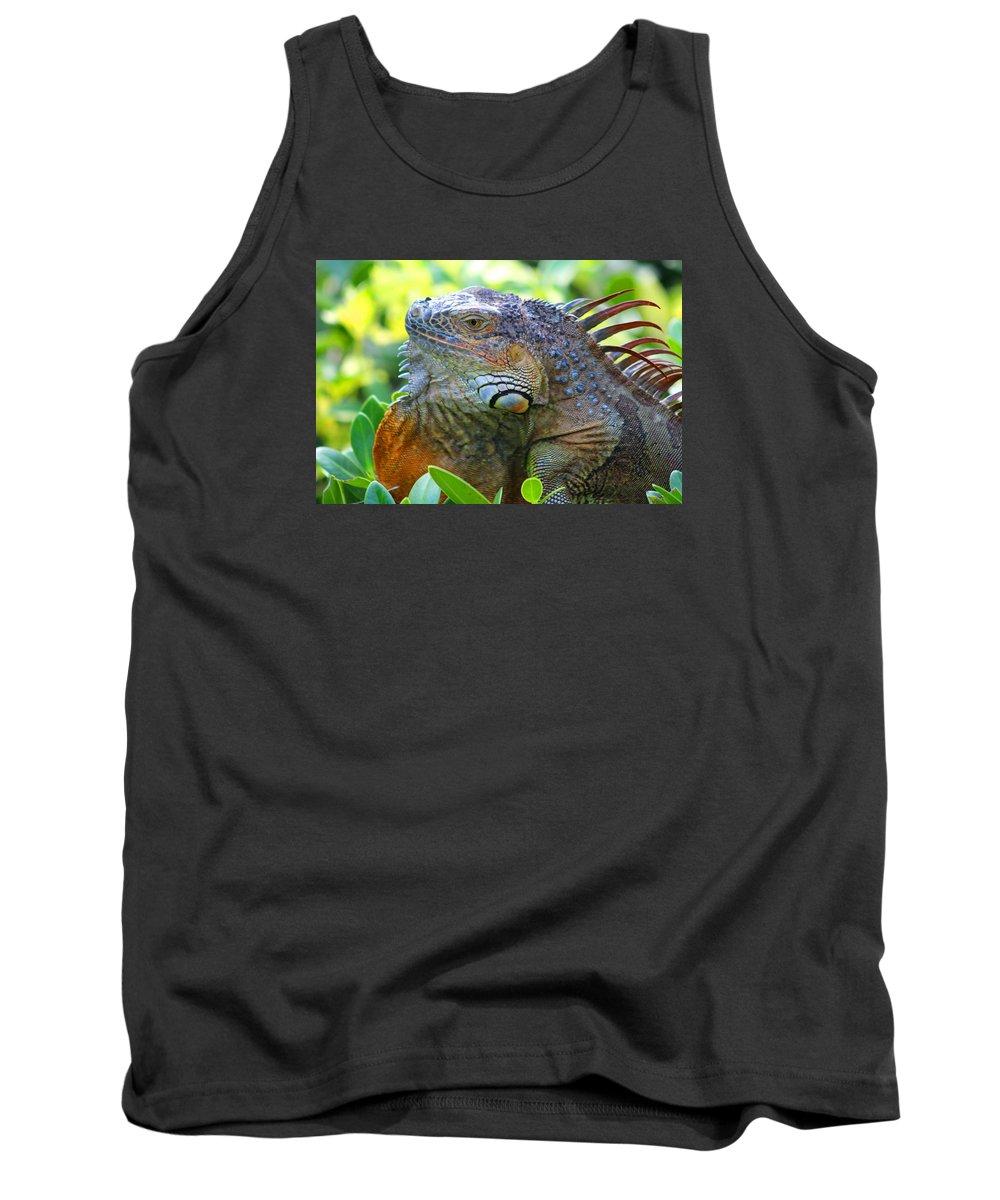 Iguana Tank Top featuring the photograph Warming Myself by Joe Arwood