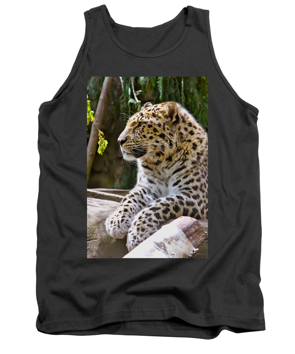Leopard Tank Top featuring the photograph Watching A Shadow by Laddie Halupa