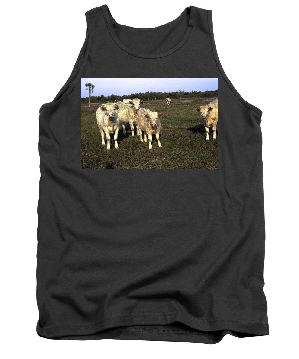 White Cows Tank Top featuring the photograph White Cows by Sally Weigand
