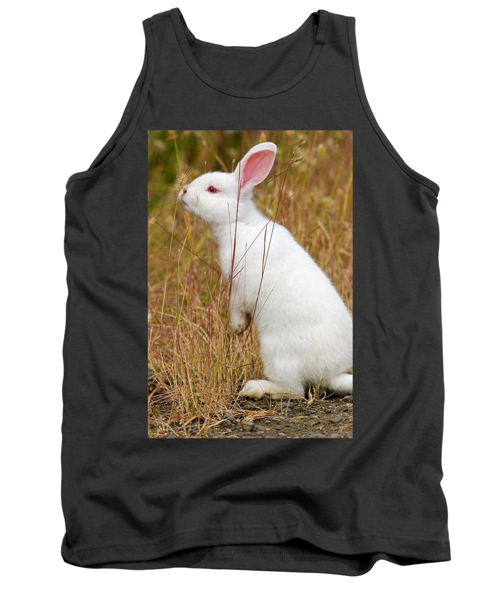 Rabbit Tank Top featuring the photograph White Wabbit by Randall Ingalls