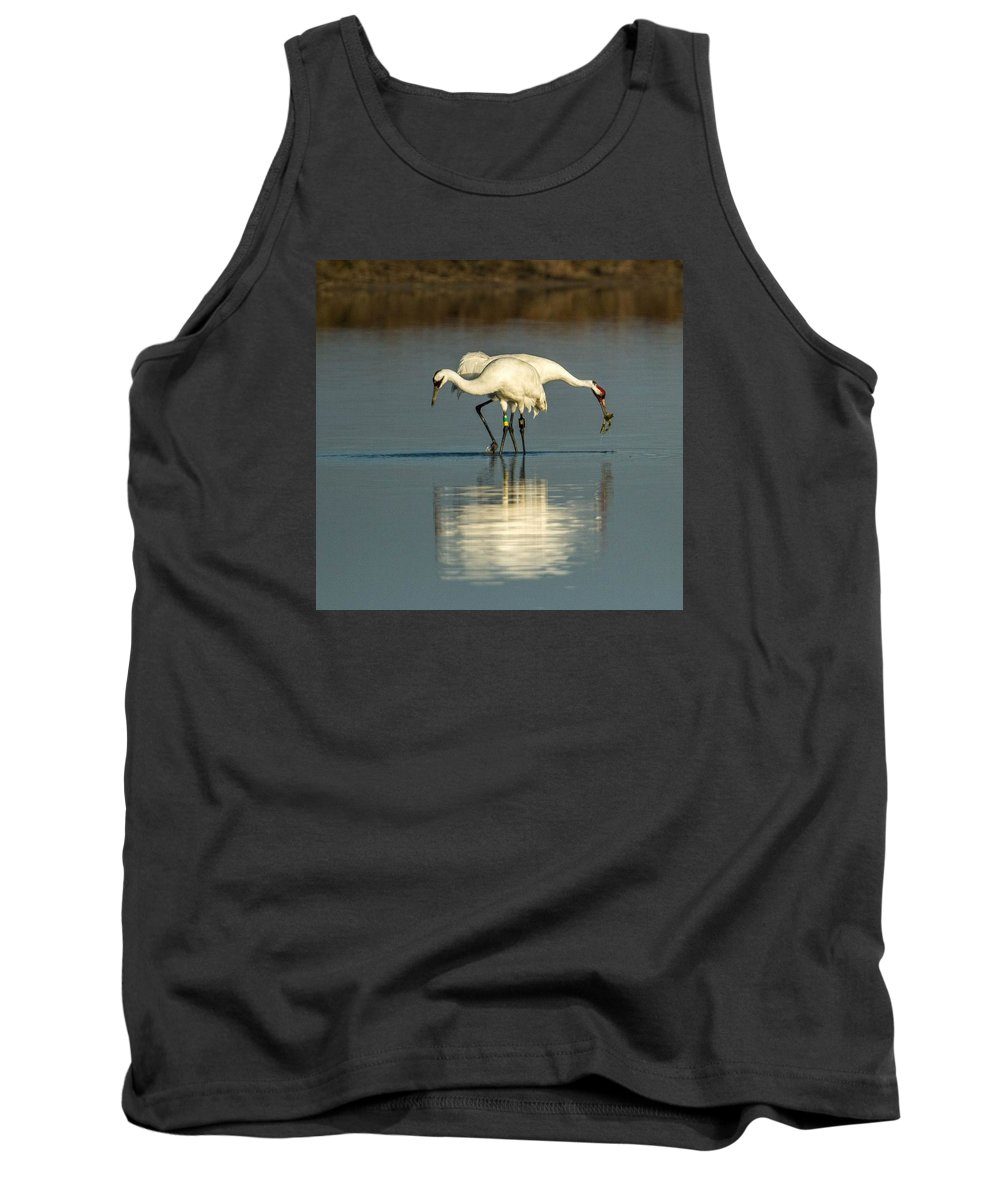 Whooping Cranes Tank Top featuring the photograph Whooping Cranes by Regina Dotson