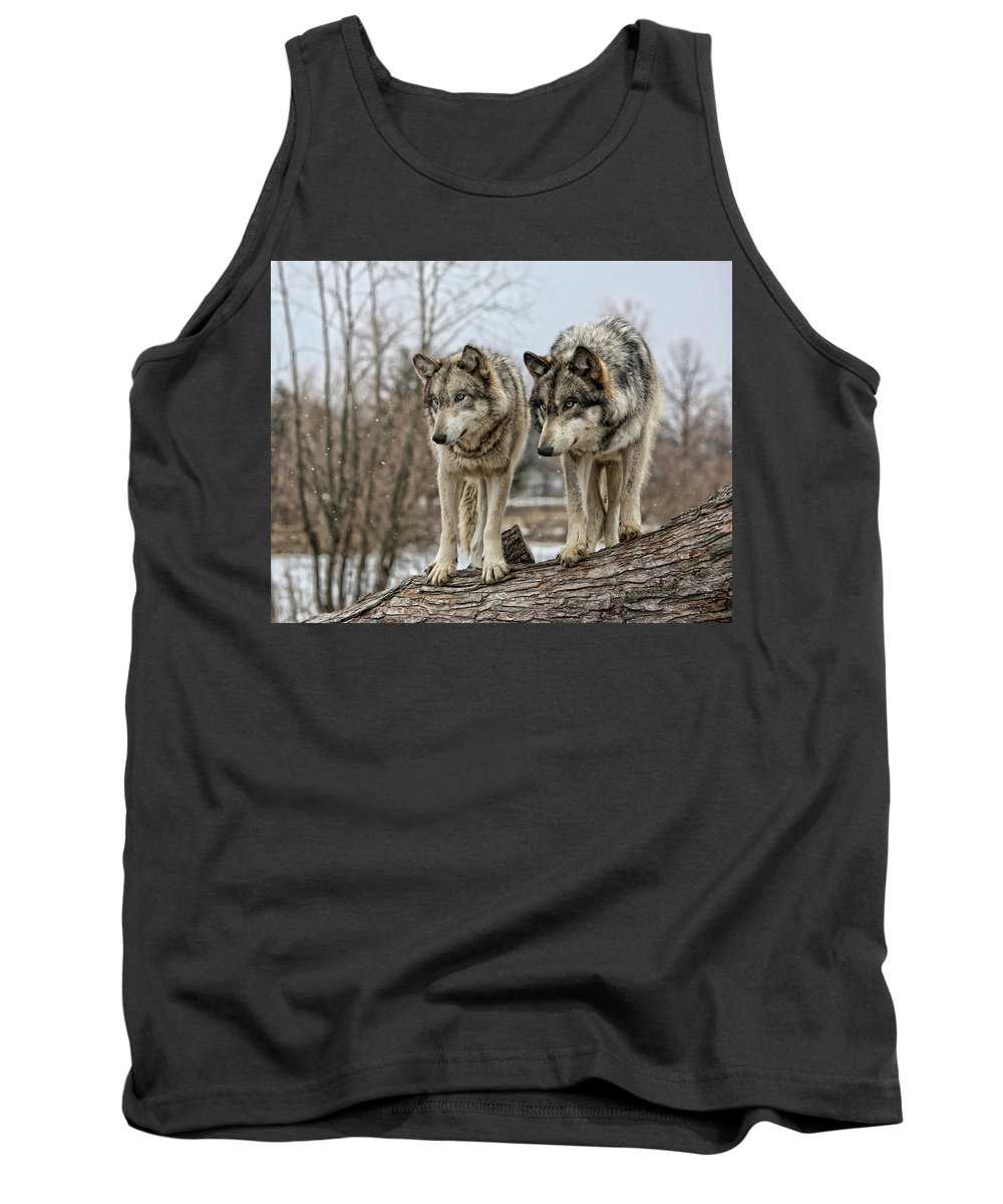 Wolf Wolves Animal Wildlife Mammal Photography Photograph Canis Lupis Grey Timberwolf Tank Top featuring the photograph Wolf Pair by Shari Jardina