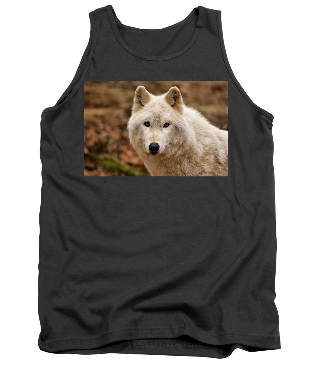 Wolf Tank Top featuring the photograph Wolf Watching by Sandy Keeton