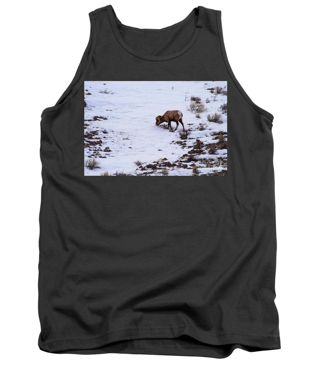 Big Horn Sheep Tank Top featuring the photograph Wyoming Big Horn by Bob Phillips