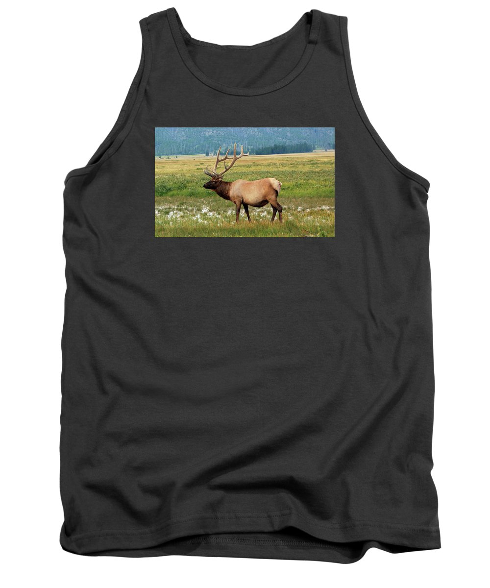 Elk Tank Top featuring the photograph Yellowstone Elk by Michele Broadfoot