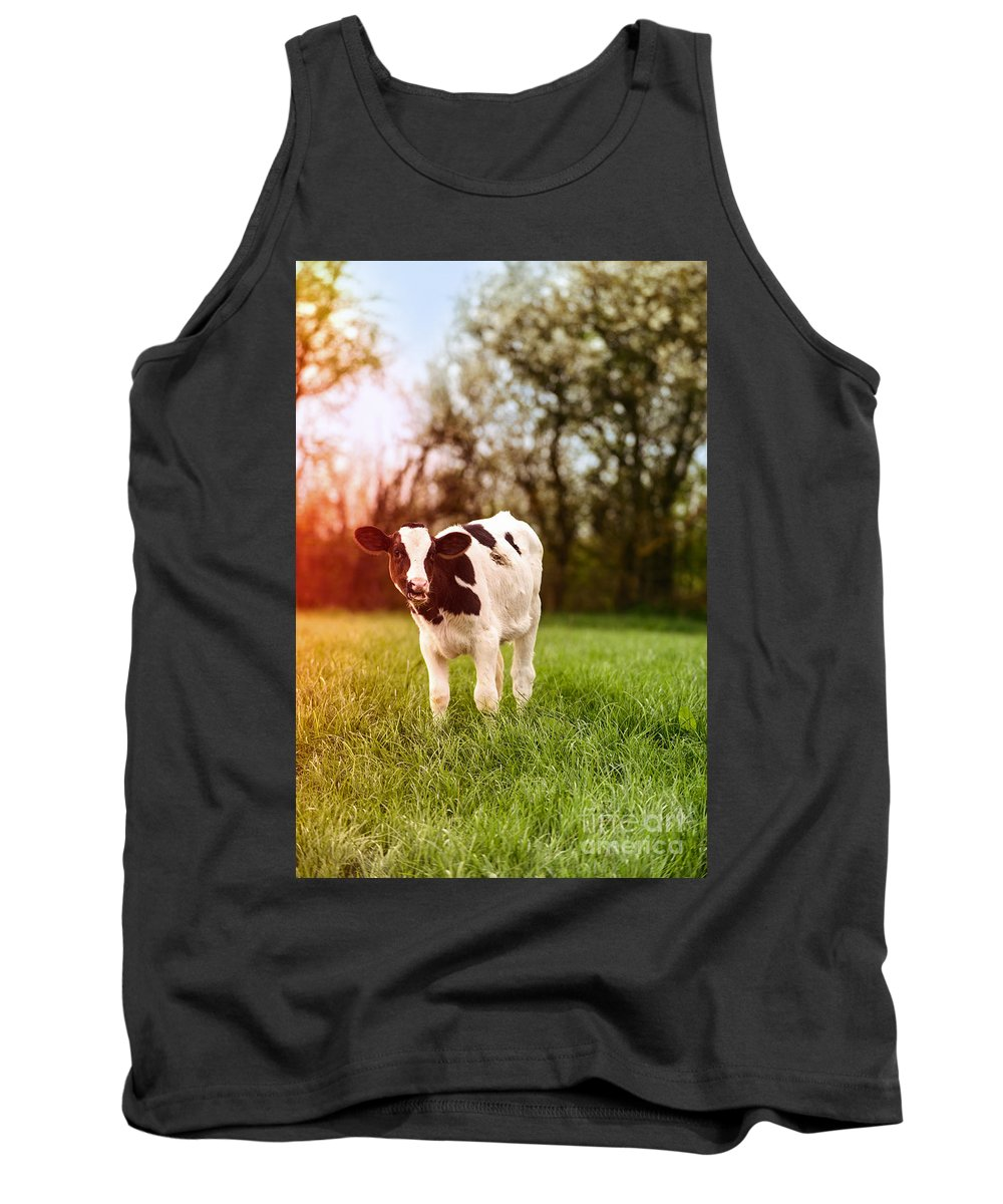 Farming Tank Top featuring the photograph Young Calf by Amanda Elwell