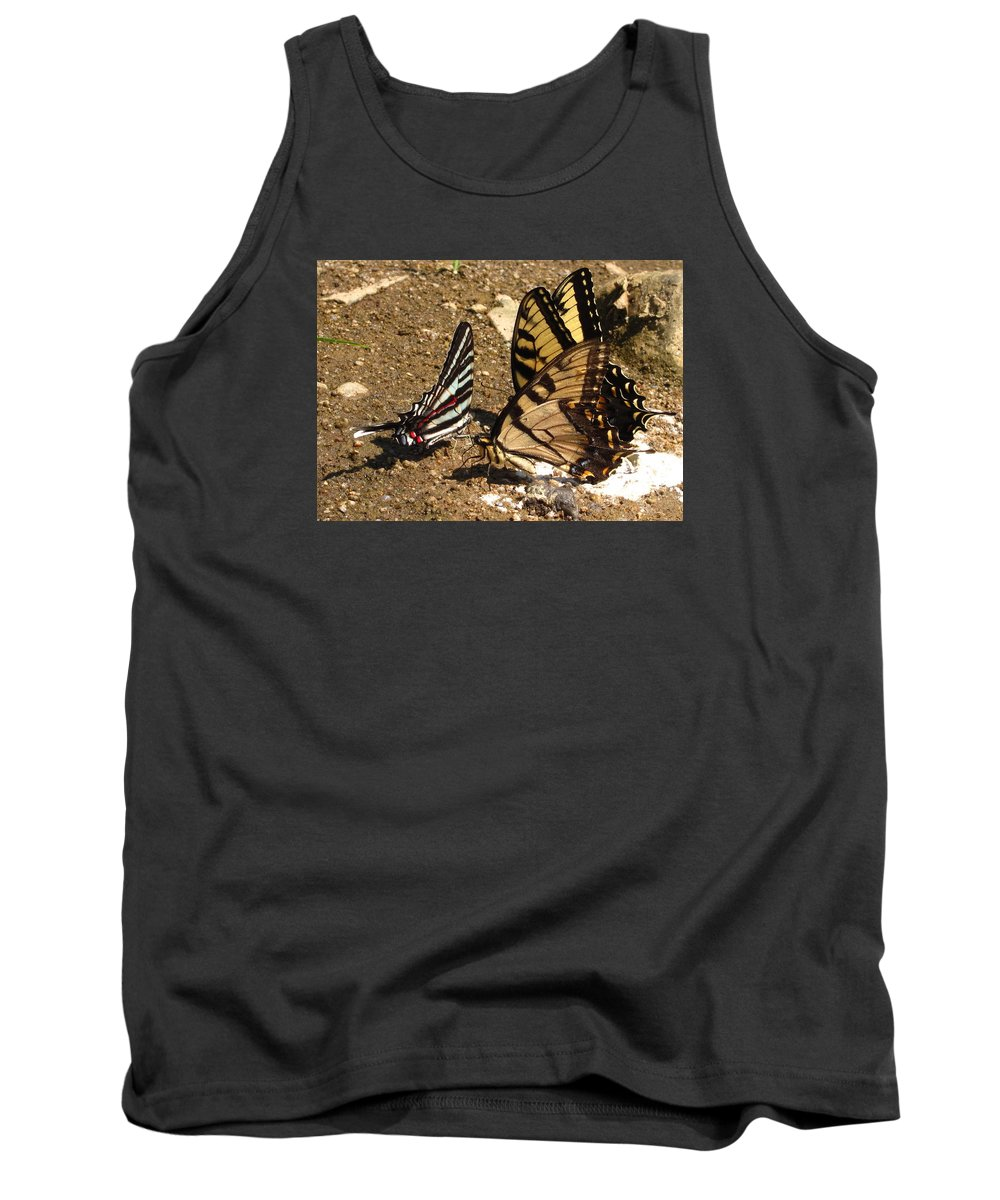 Long Tailed Zebra Butterfly Images Tiger Swallow Tail Butterfly Images Maryland Butterfly Prints Yellow Butterfly Images Entomology Forest Ecology Biodiversity Nature Rare Butterfly Prints Rare Butterfly Images Habitat Conservation Tank Top featuring the photograph Zebra And Tigers by Joshua Bales