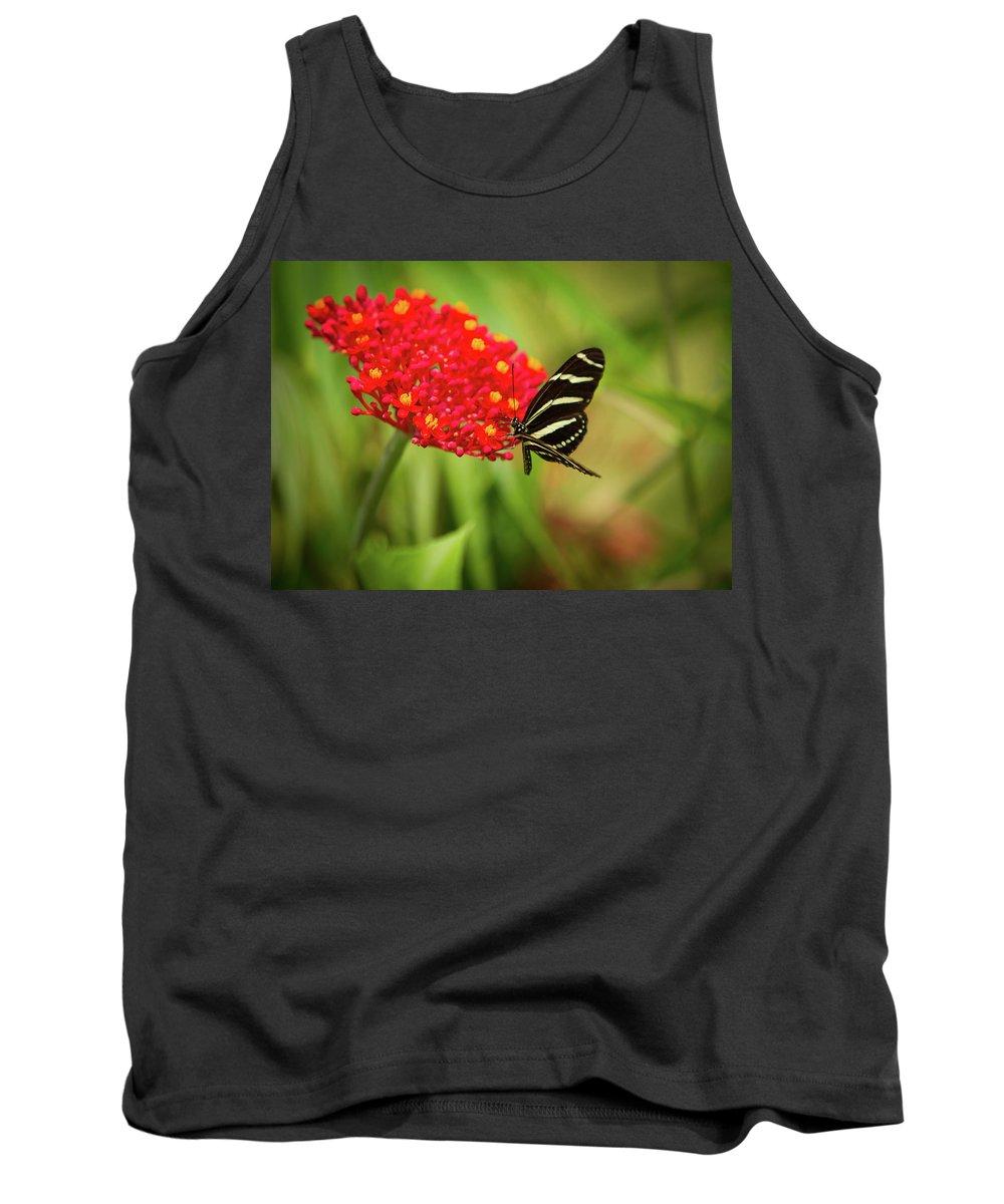 Florida Butterflies Tank Top featuring the photograph Zebra Long Wing Butterfly by Dennis Goodman
