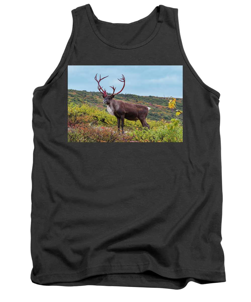 Alaska Tank Top featuring the photograph Alaska Caribou In Denali National Park by Scott Slone