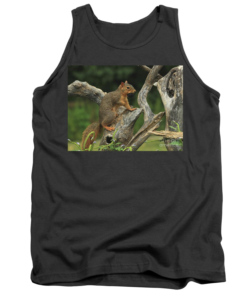 Eastern Fox Squirrel Tank Top featuring the photograph Foxy-2 by Gail Huddle