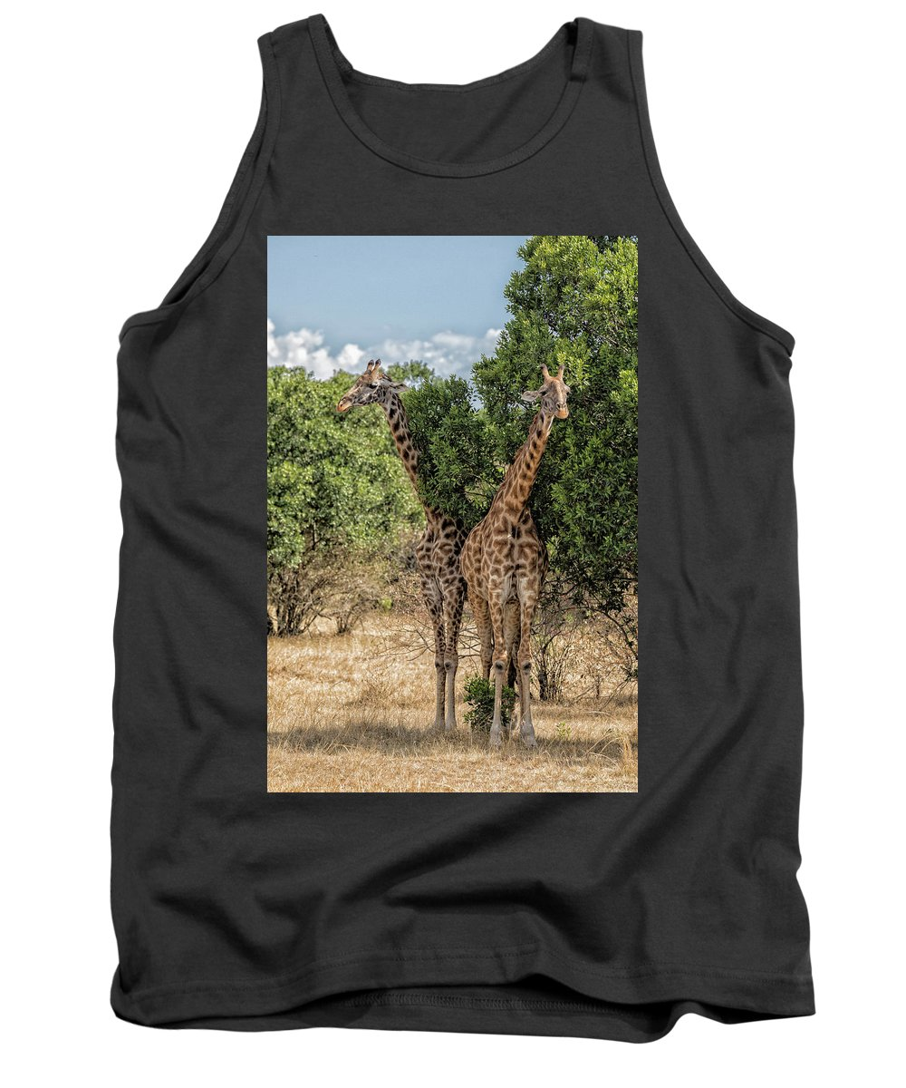 Giraffe Tank Top featuring the photograph Two-by-two Giraffes by Stephen Stookey