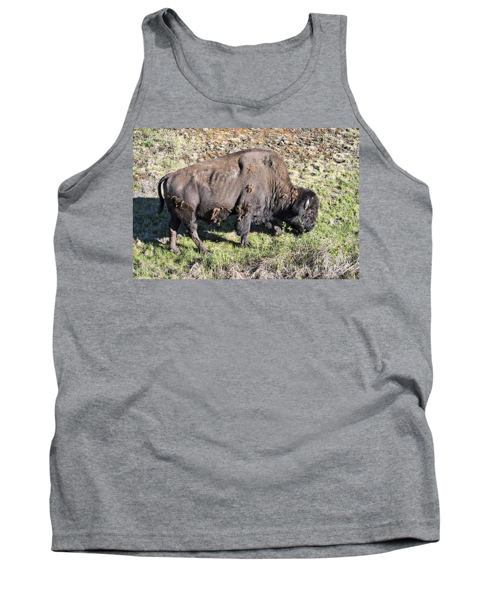 Wood Bison Tank Top featuring the photograph Bison by David Arment