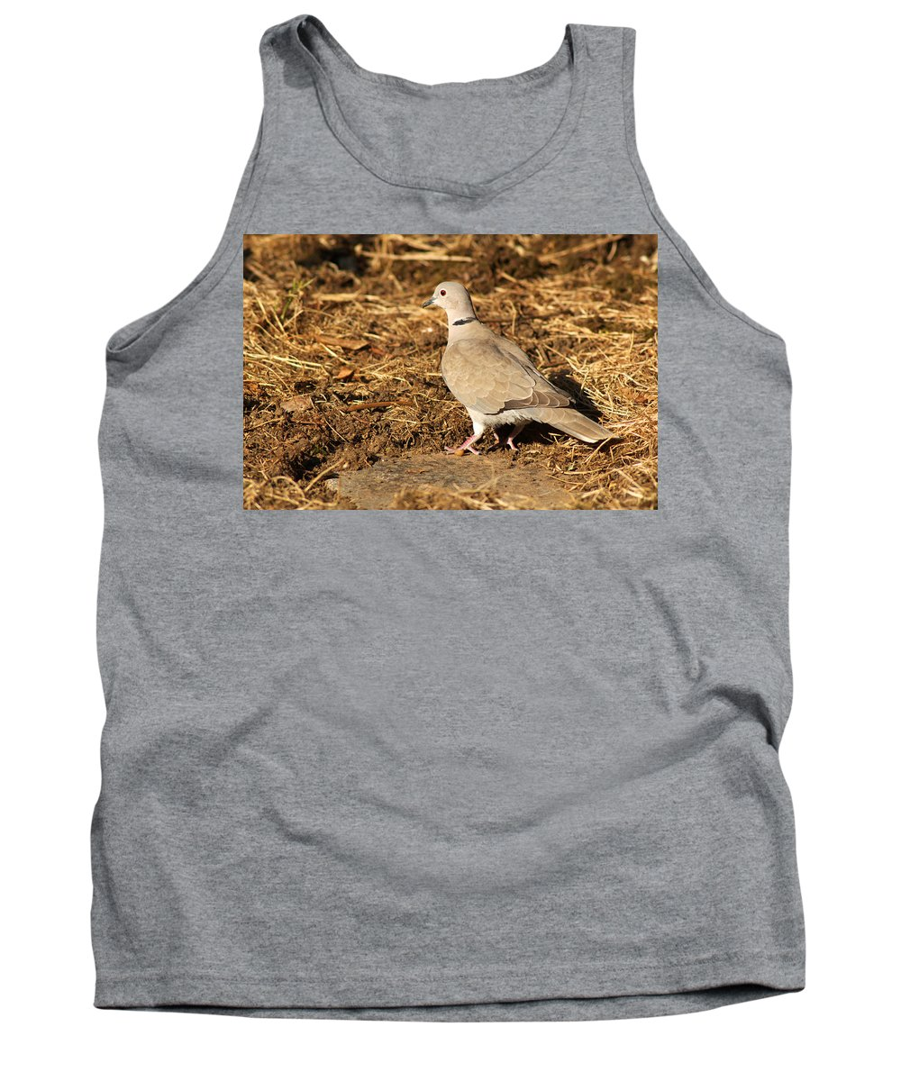 Collared Dove Tank Top featuring the photograph Collared Dove by Chris Day