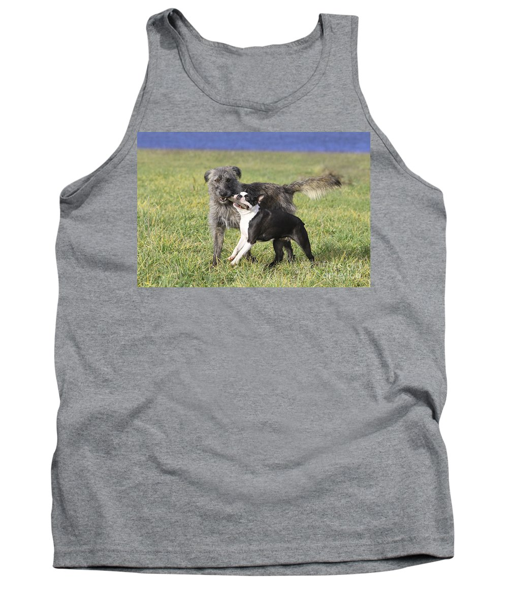 Boston Terrier Tank Top featuring the photograph Dogs Playing With Stick by Jean-Michel Labat