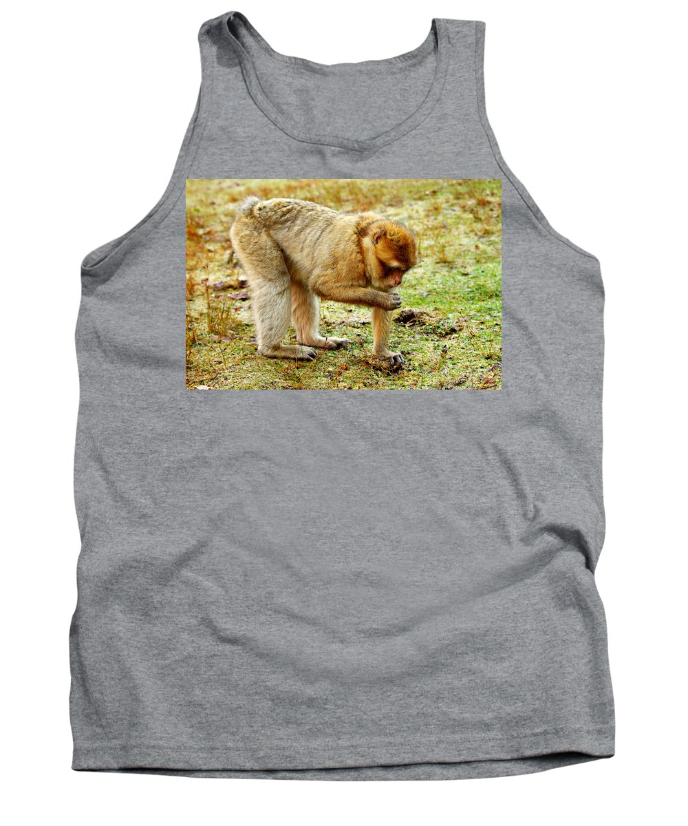 Monkey Tank Top featuring the photograph Monkey by Heike Hultsch