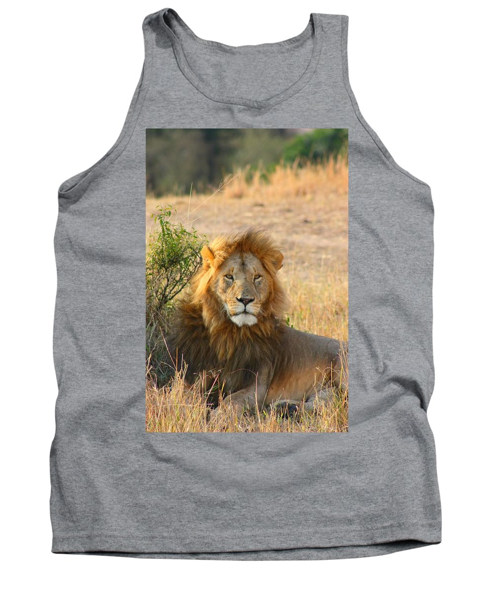 Lion Tank Top featuring the photograph Lion by Amanda Stadther
