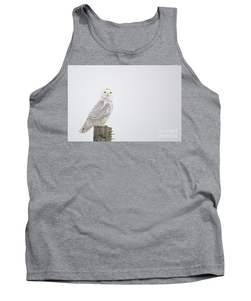 Field Tank Top featuring the photograph Observant by Cheryl Baxter