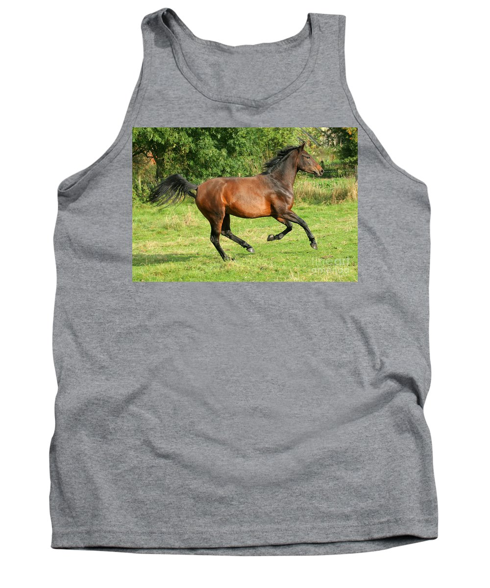 Horse Tank Top featuring the photograph Running Free by Angel Ciesniarska