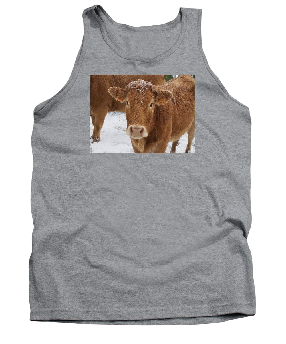 Cattle Tank Top featuring the photograph Cow by FL collection