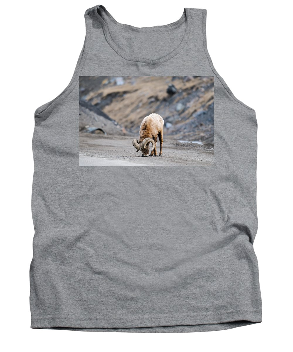 Alberta Tank Top featuring the photograph Rocky Mountain Big Horned Sheep by Brandon Smith