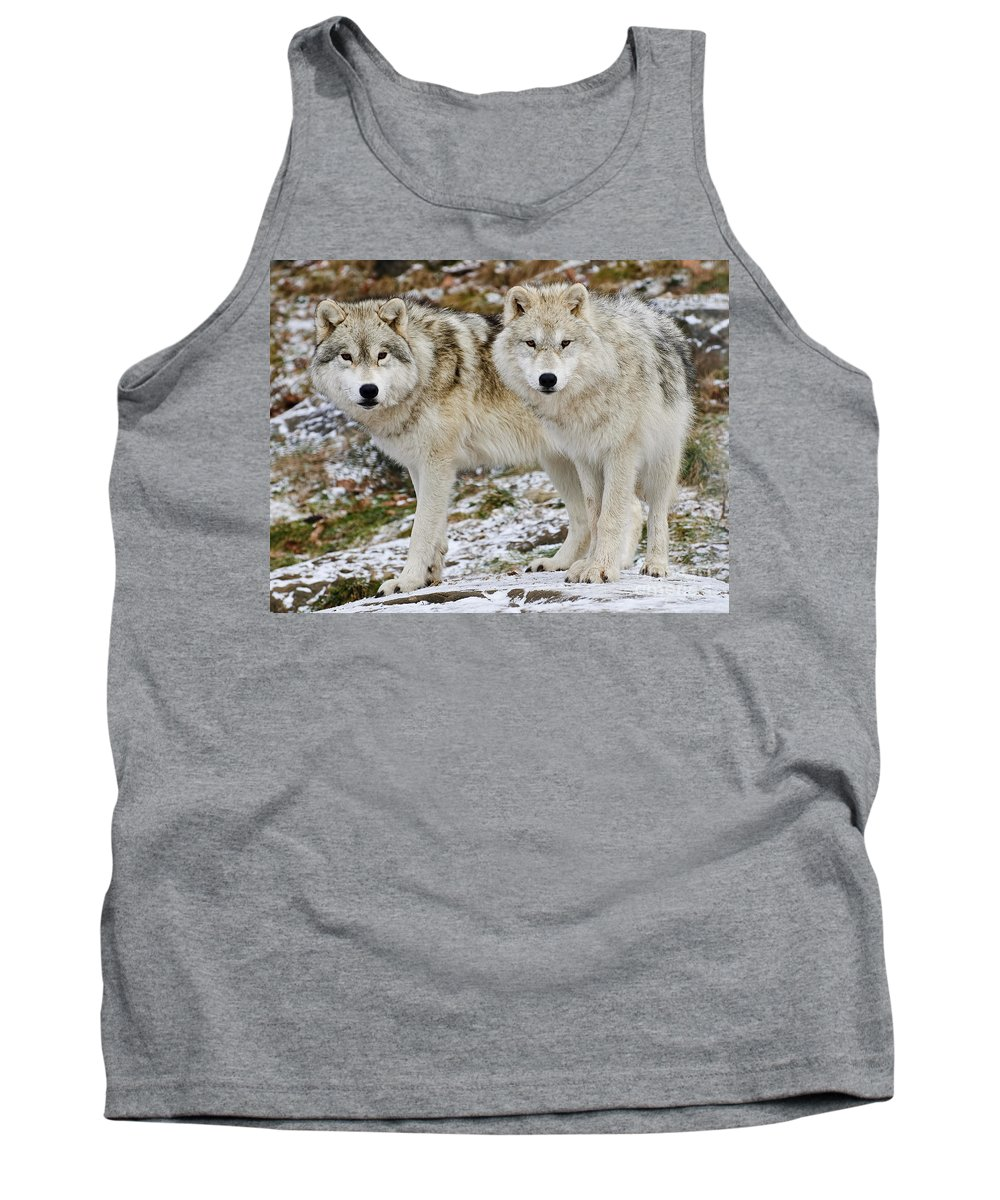 Arctic Wolf Photography Tank Top featuring the photograph Arctic Wolves by Wolves Only