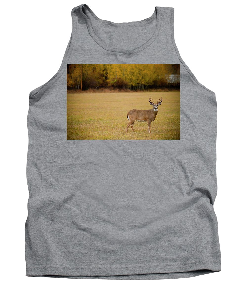 Animal Themes Tank Top featuring the photograph A Large Whitetail Buck Stairs by Noah Couser