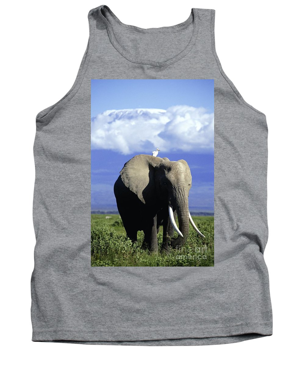 African Elephant Tank Top featuring the photograph African Elephant by Daryl Balfour