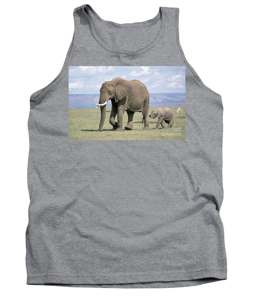 Fauna Tank Top featuring the photograph African Elephant Loxodonta Africana by David Davis