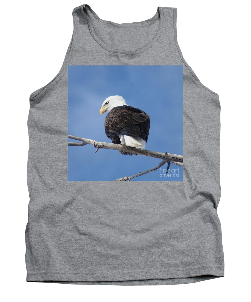 Bald Eagle Tank Top featuring the photograph Bald Eagle by Brandi Maher