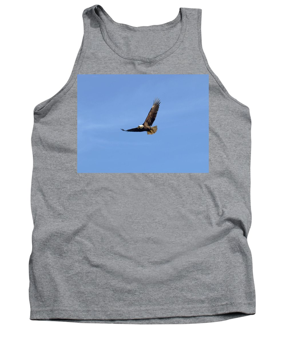 Eagle Tank Top featuring the photograph Bald Eagle Flying In The Blue Sky by Jessica Foster