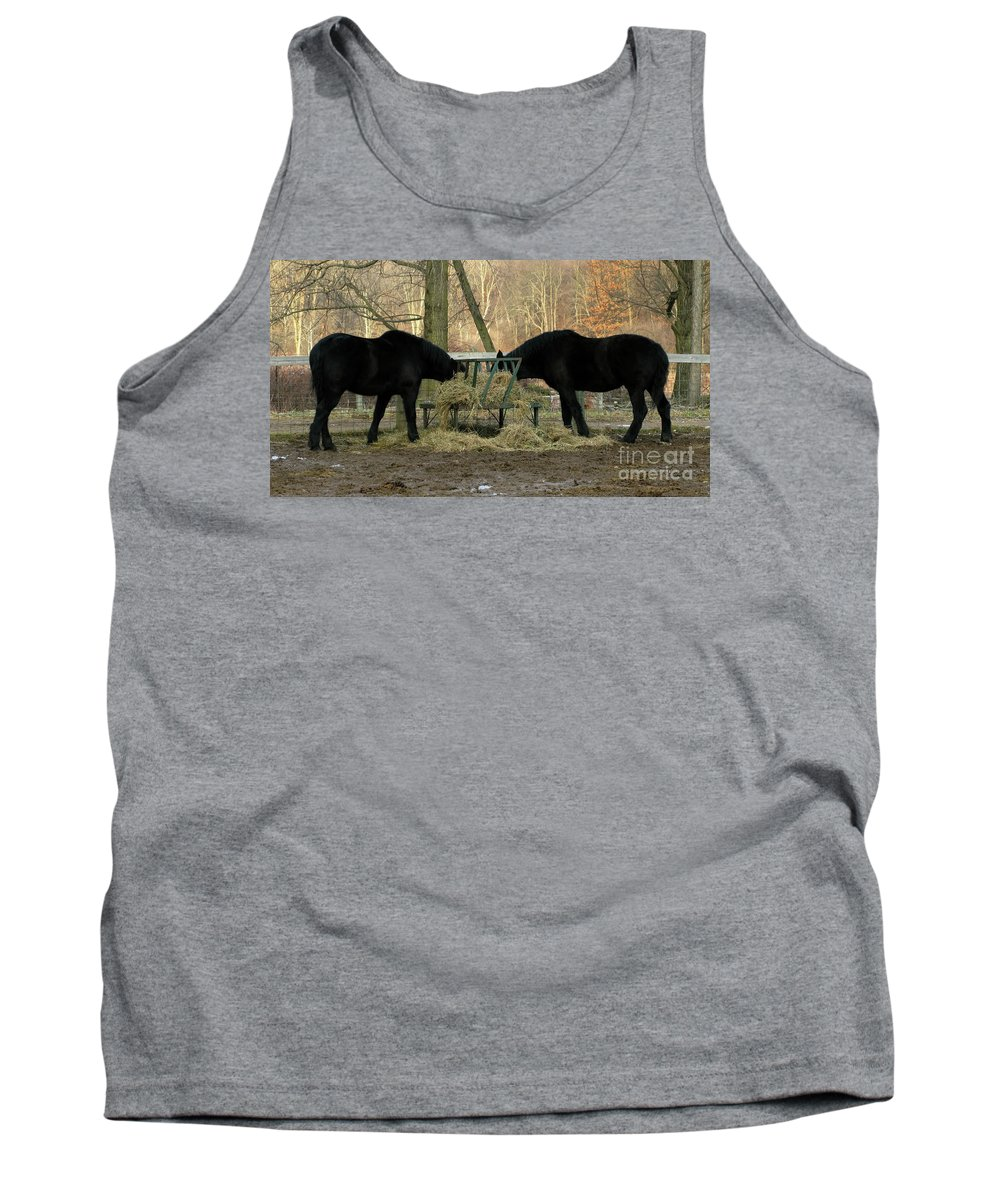 Horse Tank Top featuring the photograph Barnyard Beauties by Ann Horn