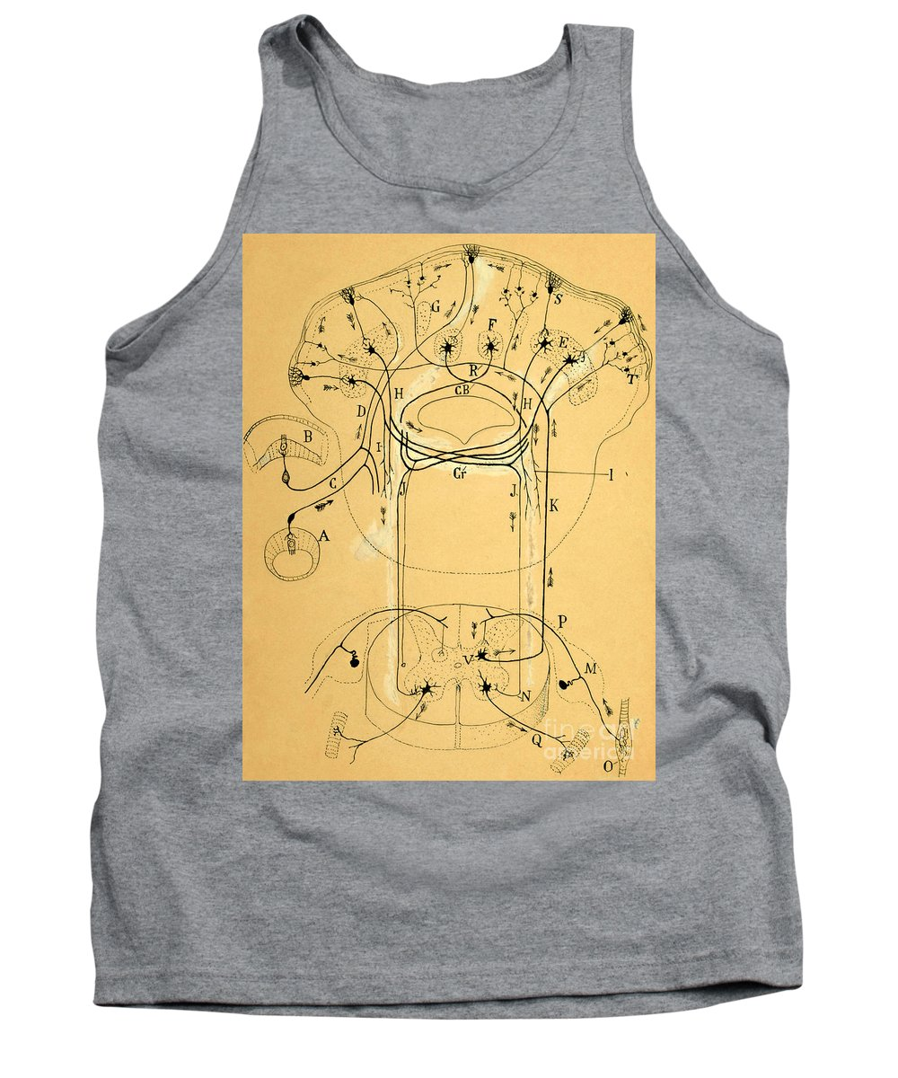 Vestibular Connections Tank Top featuring the photograph Brain Vestibular Sensor Connections By Cajal 1899 by Science Source