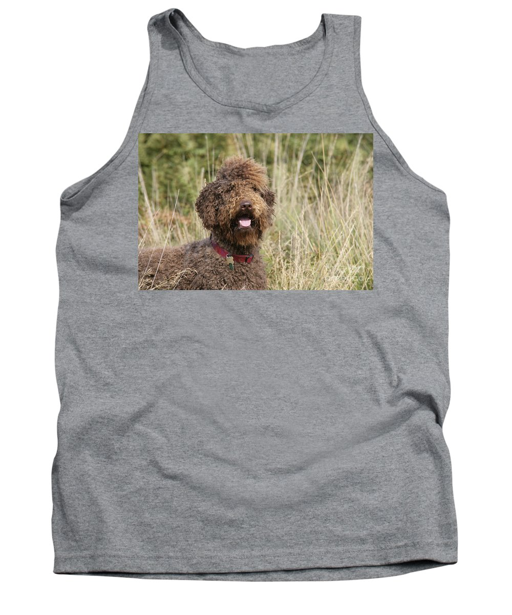 Labradoodle Tank Top featuring the photograph Brown Labradoodle In Field by John Daniels