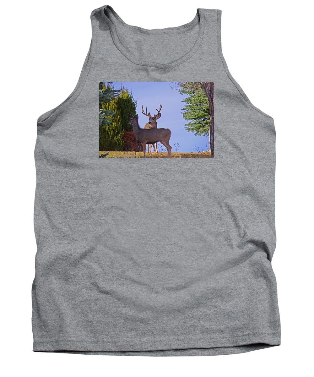 Mule Deer Tank Top featuring the photograph Buck And Doe In Yard by Mike and Sharon Mathews