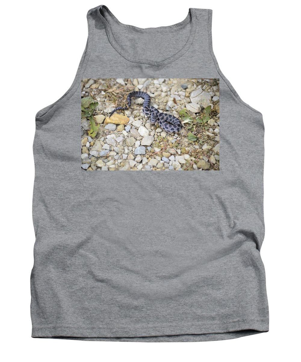 Snake Tank Top featuring the photograph Bull Snake by Bonfire Photography