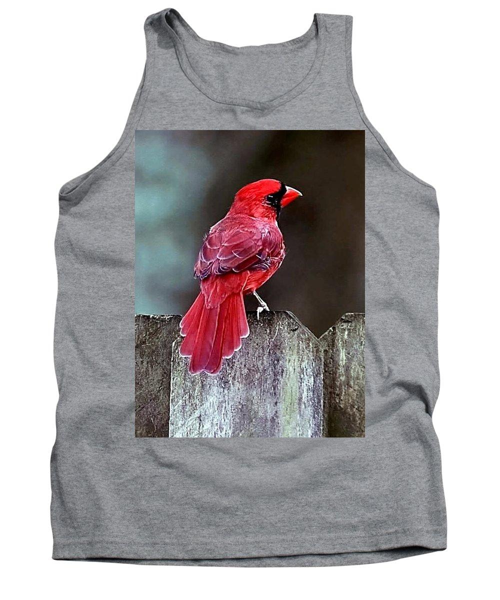 Bird Tank Top featuring the photograph Cardinal by Randy Matthews